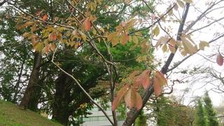 街にも秋の気配:水戸市三の丸